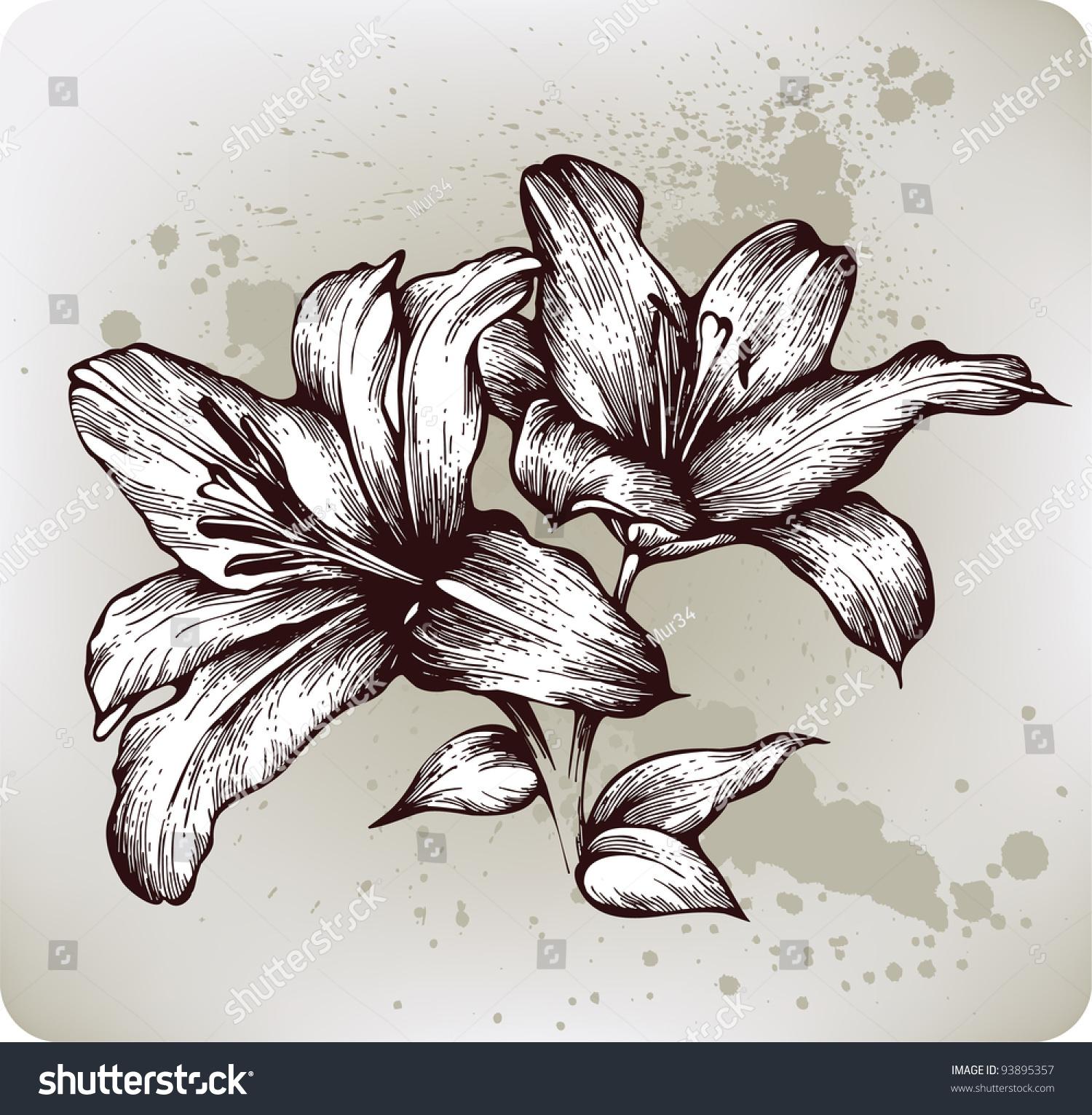 百合花,手绘.矢量插图
